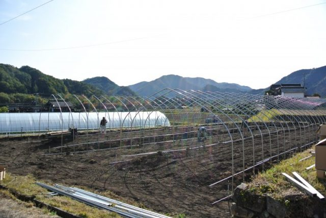 画像:わさび農園