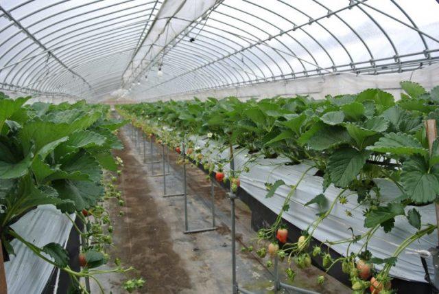 画像:農園視察